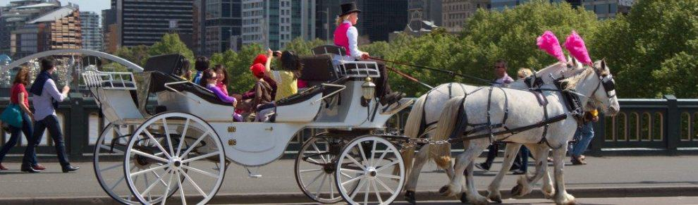 Melbourne City Tours Horse And Cart