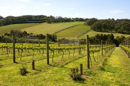 Mornington Peninsula 20