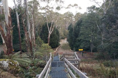 Mt-Donna-Buang-15