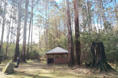 Yarra-Ranges-National-Park-08