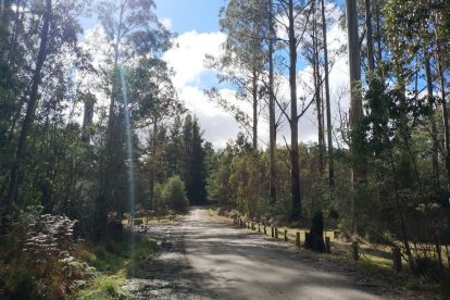 Yarra-Ranges-National-Park-11