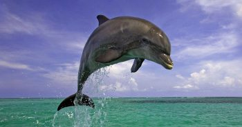Jumping Dolphin by Wictoria White2010 is licensed underCC BY 2.0