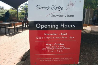 Sunny Ridge Strawberry Farm-02