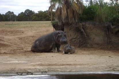 Werribee Zoo 02