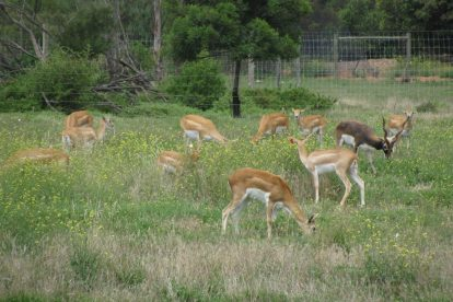 Werribee Zoo 10