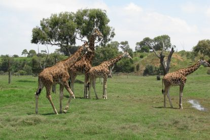 Werribee Zoo 14
