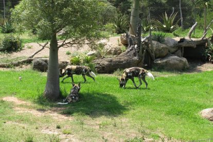 Werribee Zoo 16