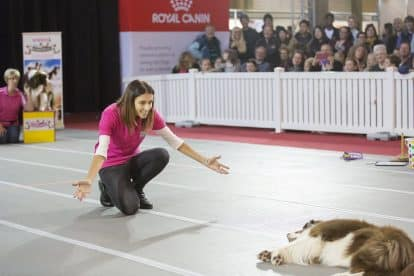Dog Lovers Show 3