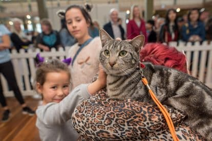 Melbourne Cat Lovers Show